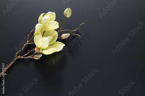 Foto a magnolia flowers on a black background