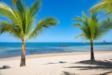 Palm Trees And Beach, Roatan, ...