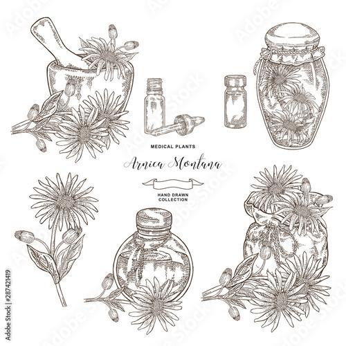 Photo Arnica montana plant