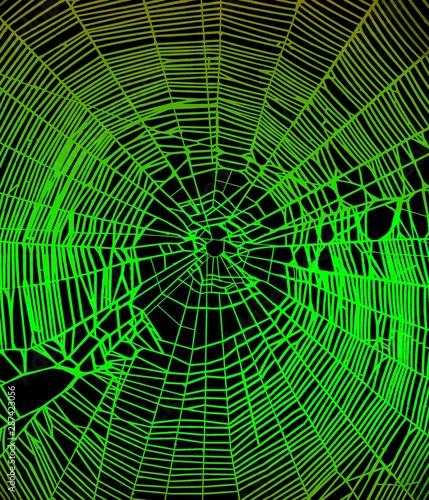 Cuadros en Lienzo  Modèle de toile d'araignée couleur verte