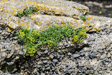 Opportunistic Plants Growing A...