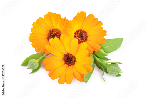 Türaufkleber Natur Calendula. Marigold flower isolated on white background