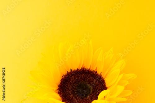 Spoed Fotobehang Zonnebloem Sunflowers on white