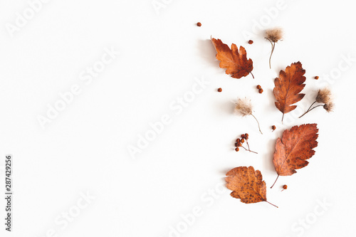 Fototapeta Autumn composition. Dried leaves, flowers, rowan berries on white background. Autumn, fall, thanksgiving day concept. Flat lay, top view, copy space obraz