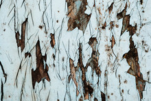 Old Peeling Paint. Wood Texture. The Background