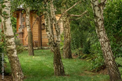 drewniany domek w brzozowym lesie - 287436829
