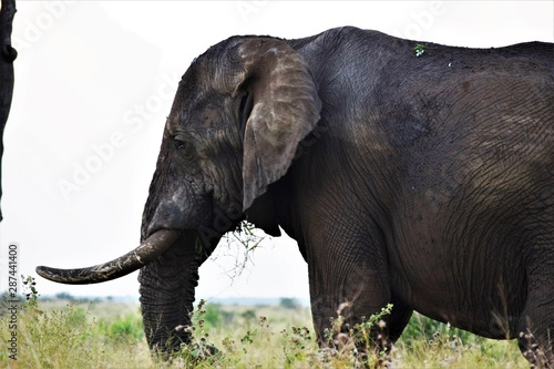 Photo  Close shot of an elephant standing in a dry grassy field with a blurred backgrou