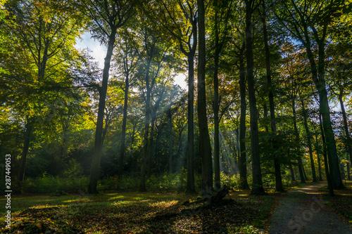 Foto auf Gartenposter Wald Wald_16