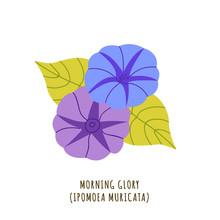 Morning Glory Tropical Flower