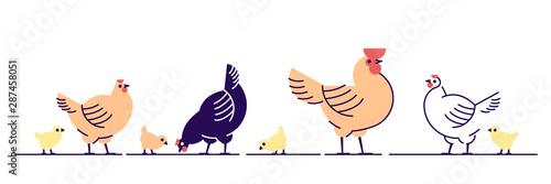 Fotografia Chickens flat vector illustration