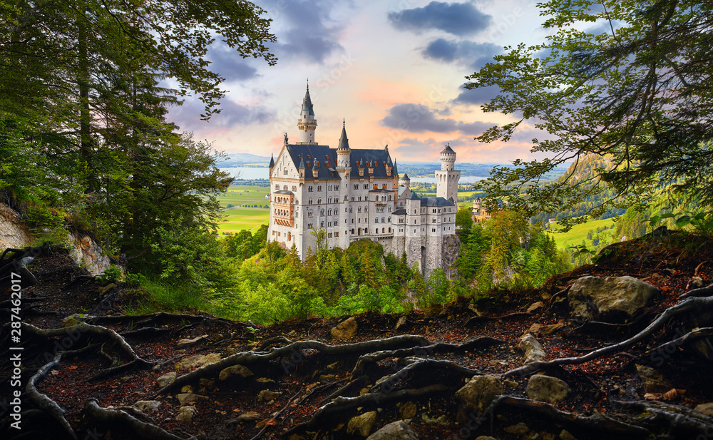 Fototapeta Fairy-tale Neuschwanstein Castle in Bavaria, Germany. View from the bluff with tree roots at famous vintage landmark. Picturesque evening sunset landscape.