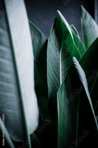 Dark green palm leaves background Wall mural