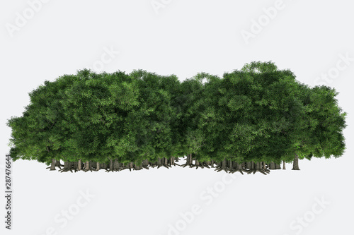 Poster Blanc Forest isolated. Image useful for banners, posters or photo maipulations. 3d rendering. Illustration