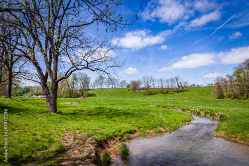 Canvas Print creek in a spring meadow cow pasture with a blue sky and white puffy clouds