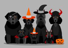 Group Of  Black Halloween Dog