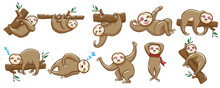 Sloth Vector Set Graphic Clipart