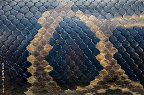 Seamless snakeskin pattern and textures Canvas Print