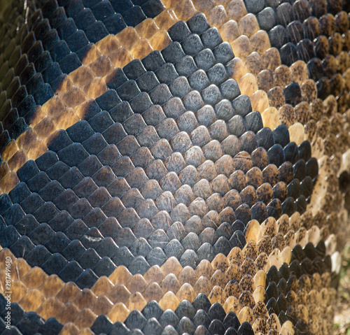 Photo  Seamless snakeskin pattern and textures
