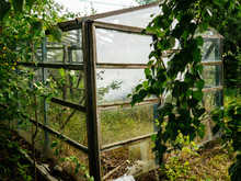 Old Greenhouse For Vegetables. Overgrown Greenhouse In Early Autumn