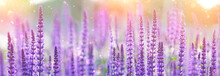 Purple Flowers Of Decorative S...