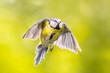Flying bird on bright green background