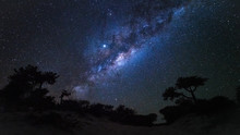 Night Sky With Milkyway Galaxy Over Tree Silhouettes, As Seen From Madagascar Coast