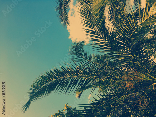 Cadres-photo bureau Palmier Palm tree leaves and the sky, summertime travel background