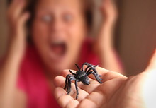 Spider In A Hand, Arachnophobia