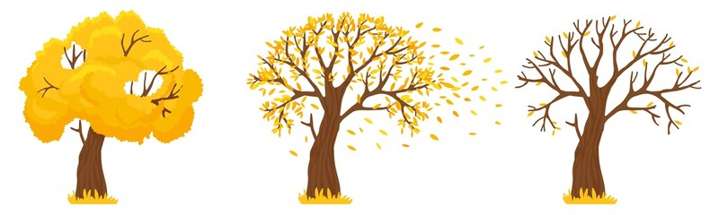 Autumn tree. Yellow leaves fall, trees with fallen leaves and orange leafs fly. Canada october and september autumnal season golden garden tree foliage isolated vector illustration