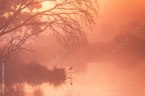 Stampa su Tela  Autumn foggy rural sunrise. Sunny dawn on river