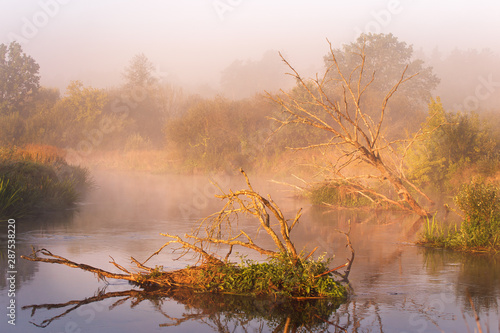 Fotografia  Old dry oaks laying in water. Autumn foggy rural sunrise
