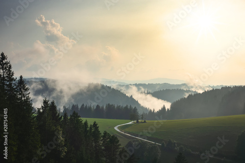 misty landscape with trees - 287543415