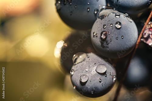 Foto auf Gartenposter Makrofotografie Close up beautiful fresh blue grape grains background. Macro view.