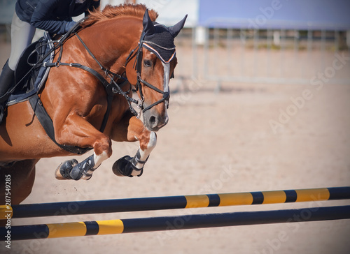 A redhead horse with a rider in the saddle jumps a high yellow-black barrier on a sandy arena at horse jumping competitions on a Sunny day