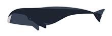 Arctic Whale Flat Vector Illus...