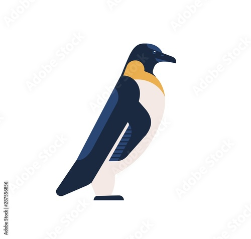 Penguin flat vector illustration Wallpaper Mural