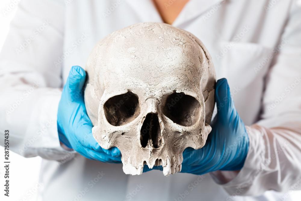 Fototapety, obrazy: Forensic pathologist. Doctor in rubber gloves holding human skull.