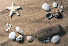 Top View Of A Sandy Beach With Starfish, Seashells And A Piece Of Driftwood