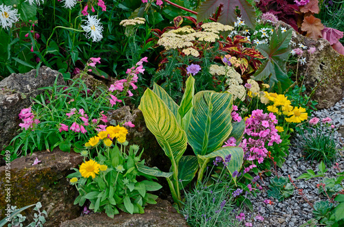 Photo A colourful flower border with wild planting of mixed flowers including Astilbe,