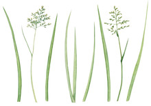 Set Of Wild Meadow Herbs And Leaves. Watercolor Hand Drawn Illustration With Green Grass Silhouette Isolated On White Background.