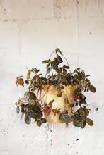 Hanging Planter Of Succulent P...
