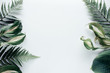 canvas print picture - Forest flower leaf on white background. Flat lay, top view
