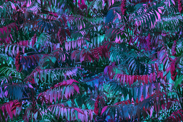FototapetaBlue and pink emerald leaves, background. Modern floral texture