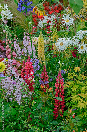 A colourful flower border with wild planting of mixed flowers including Lupins a Wallpaper Mural