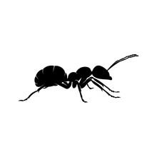 Ant Vector Design Logo. Ant Il...