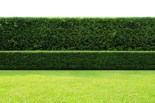Long Tree Hedges, Double Layers  (two Steps);  Small And Tall Hedges.