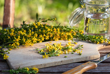 Preparation Of Tincture From European Goldenrod Plant