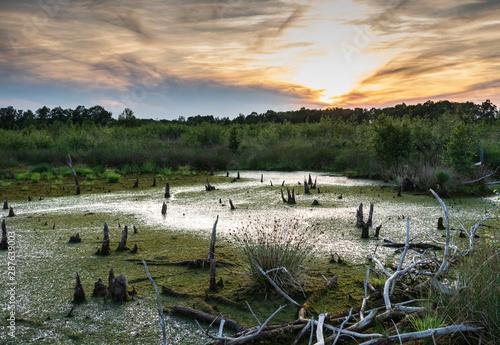 Fotografie, Obraz Diepholz Bog in Low Saxony, Germany