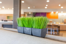 Fake Grass In Metal Planter On Top Of Couch, Modern Hotel Decoration
