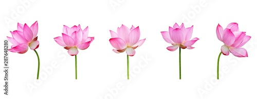 Montage in der Fensternische Lotosblume Lotus flower collections isolated on white background. File contains with clipping path so easy to work.